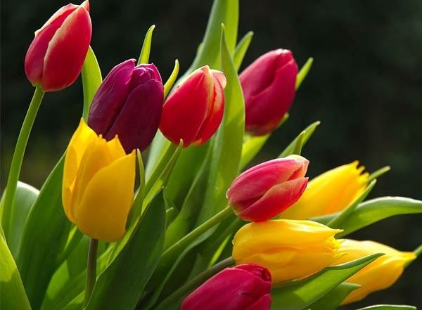 زراعة الازهار في المنزل