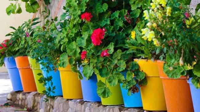 كيفية زراعة الورد