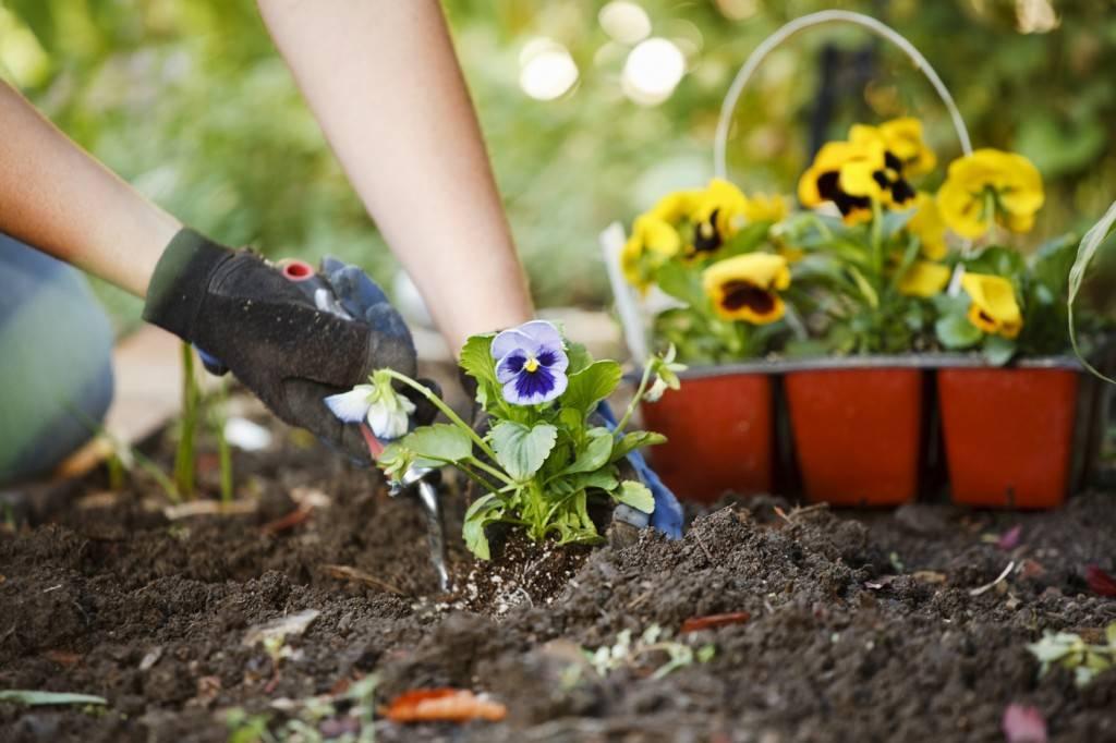 طريقة زرع الورد